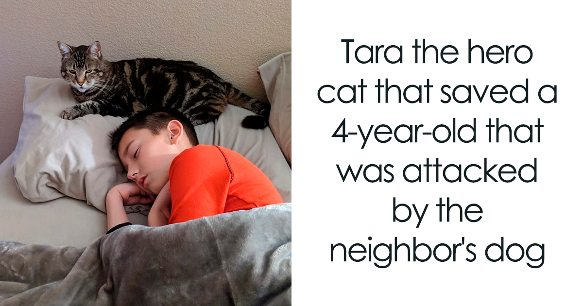 24 Times Cats Surprised Humans With Their Heroic Acts