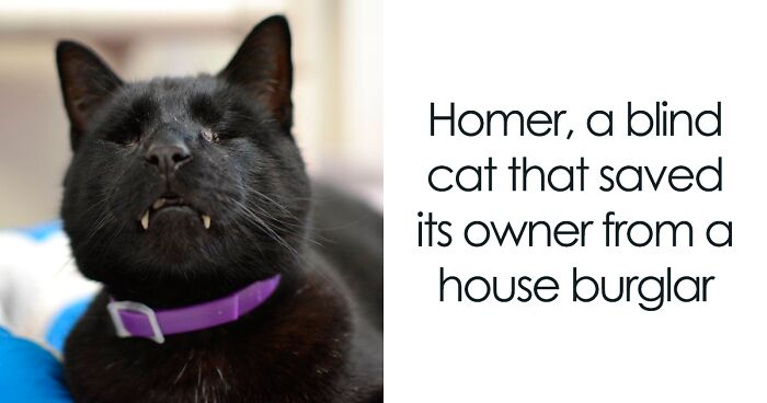 24 Cats Who Proved To Be Heroes