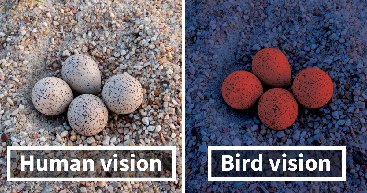 This Is How Birds See The World As Compared To Humans And It's Pretty Amazing