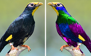 This Is How Birds See The World And It's Both Psychedelic And Mesmerizing