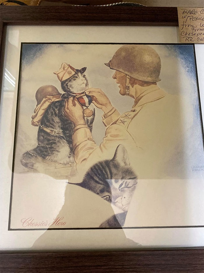 I Have So Many Questions. Like Who Is This Brave Kitty? And What Did He Do To Earn His Metal? And How Did They Get Him To Wear That Uniform? Does He Put His Little Helmet On Himself?