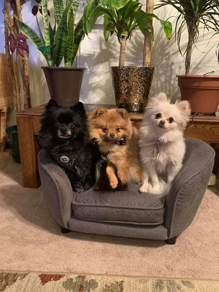 The Fur Babes Got A Tiny Couch. $30.. What A Steal
