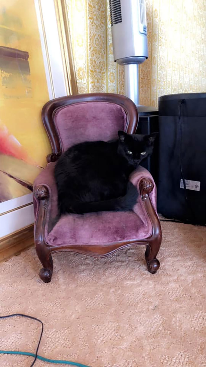 This Is Her Napping Chair