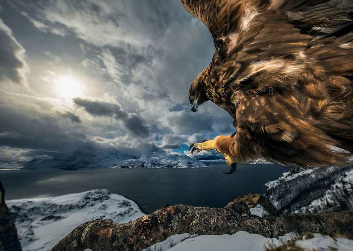 """""""Tierra Del Águila"""" Por Audun Rikardsen, Noruega, Categoría: Aves, Ganador 2019"""