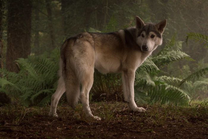 When Dogs Appear In Movies And TV, Sometimes They Have To Have Cgi Tails Because They Wag Too Much During The Scene
