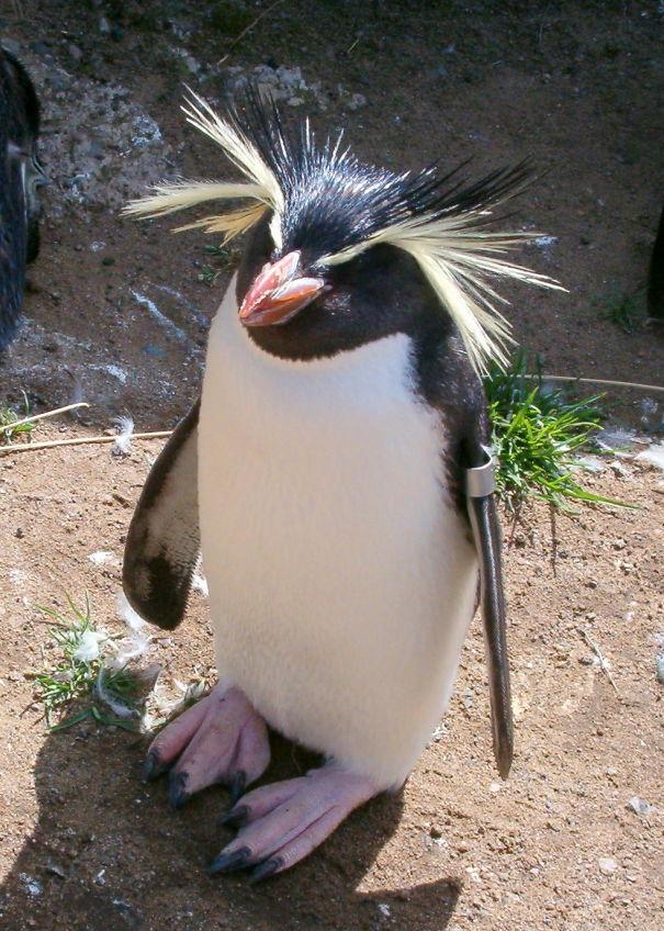 penguinfrom-edinburgh-5d94f19c2e332.jpg