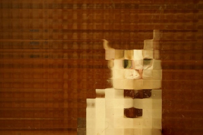 24 Times People Spotted Pixel Cats In Real Life And Just Had To Share