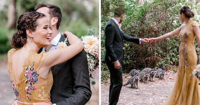 This Gang Of Racoons Crashes A Wedding Photoshoot And It's Both Cute And Hilarious