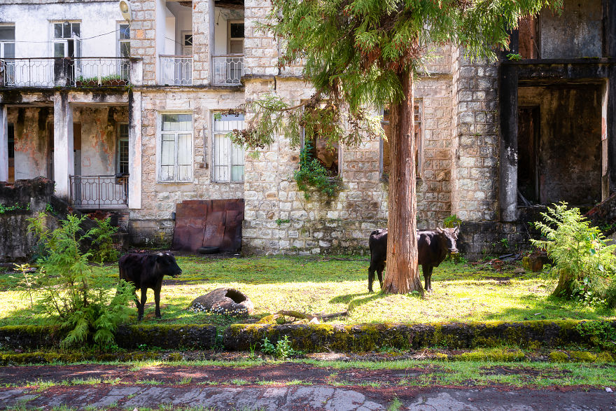 Cows In Front Of A Building