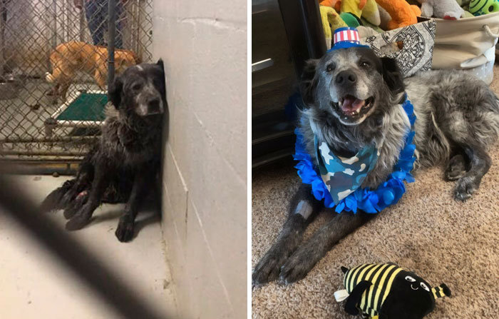 'Broken And Forgotten' Dog Can't Stop Smiling After He Realizes He's Being Rescued