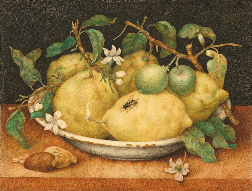 Still Life With A Bowl Of Citrons, Giovanna Garzoni, 1640s