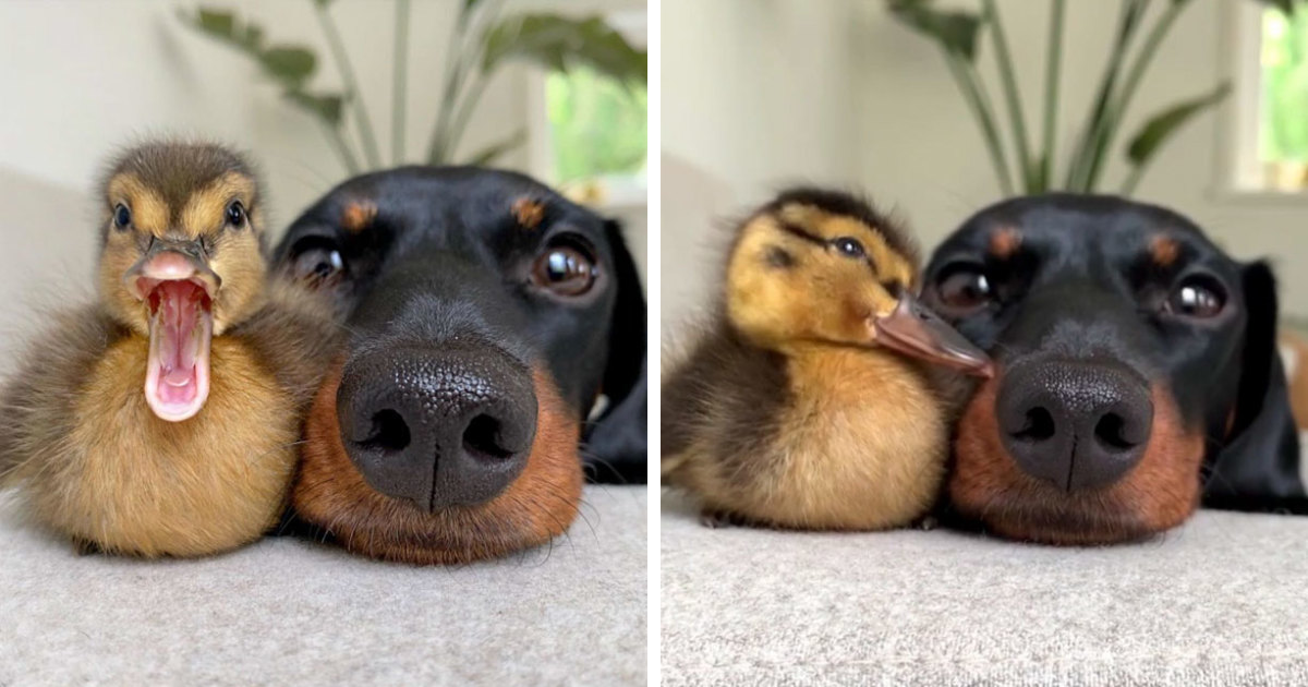 35 Totally Blessed Duck Images To Make You Smile