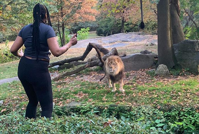 Esta mujer se metió en el recinto de un león, demostrando su estupidez