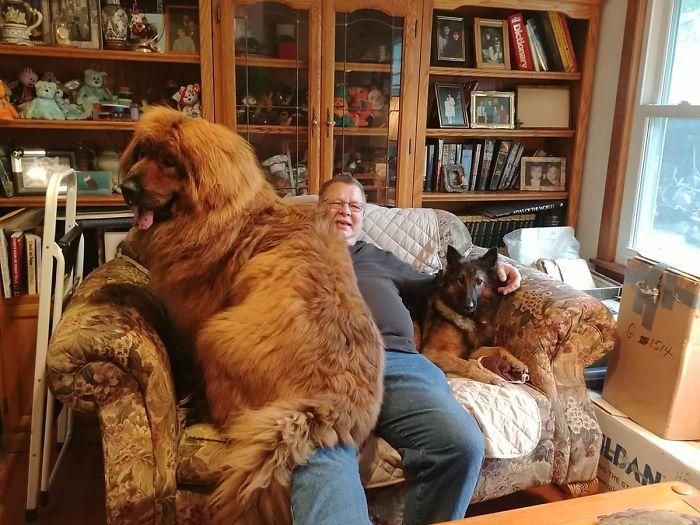Cachorro de 11 meses junto a otro perro adulto