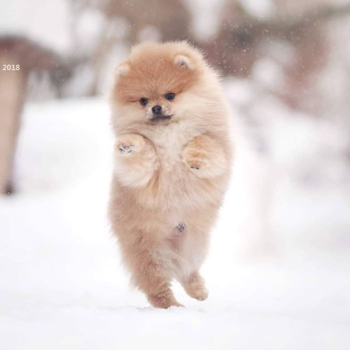Here Are 23 Adorable Photos Of Furballs Jumping Around And Getting Their First Taste Of Snow