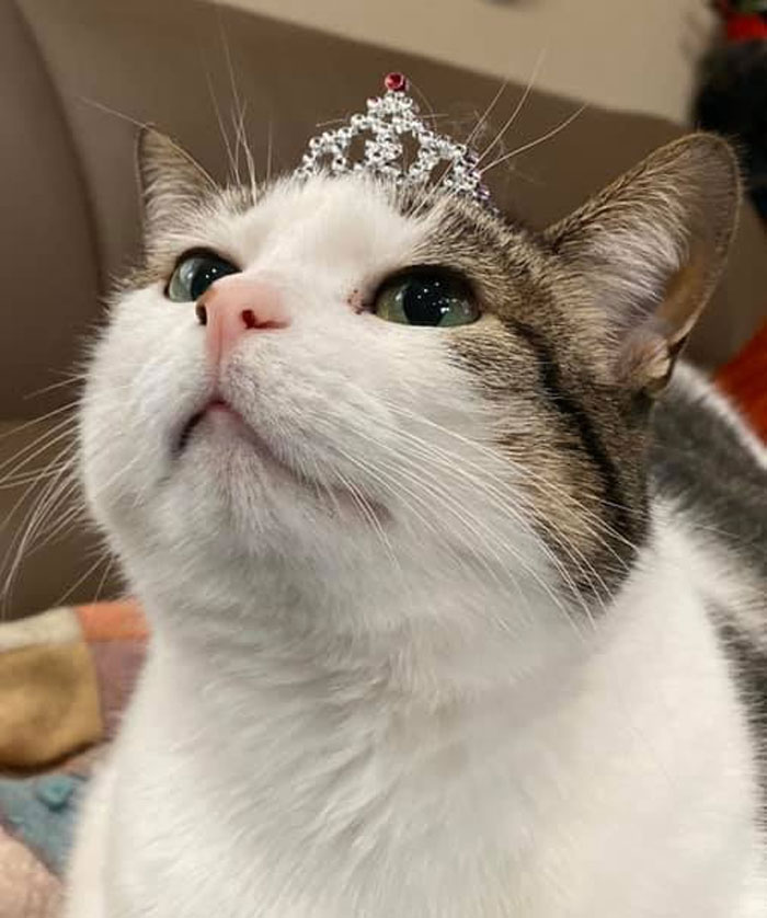 Found A Cat Sized Tiara For My Princess