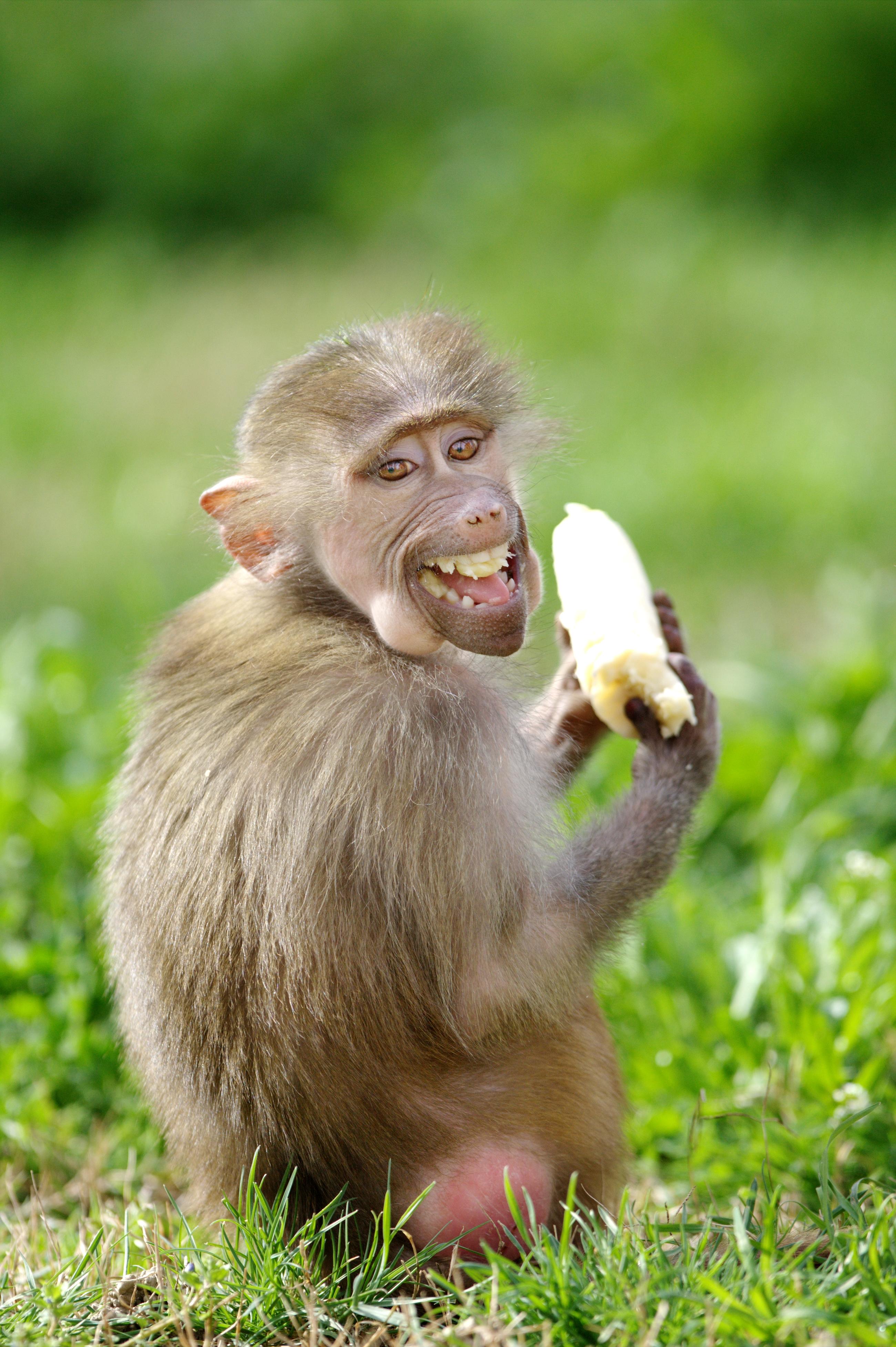17 Funniest Animal Photos I Made