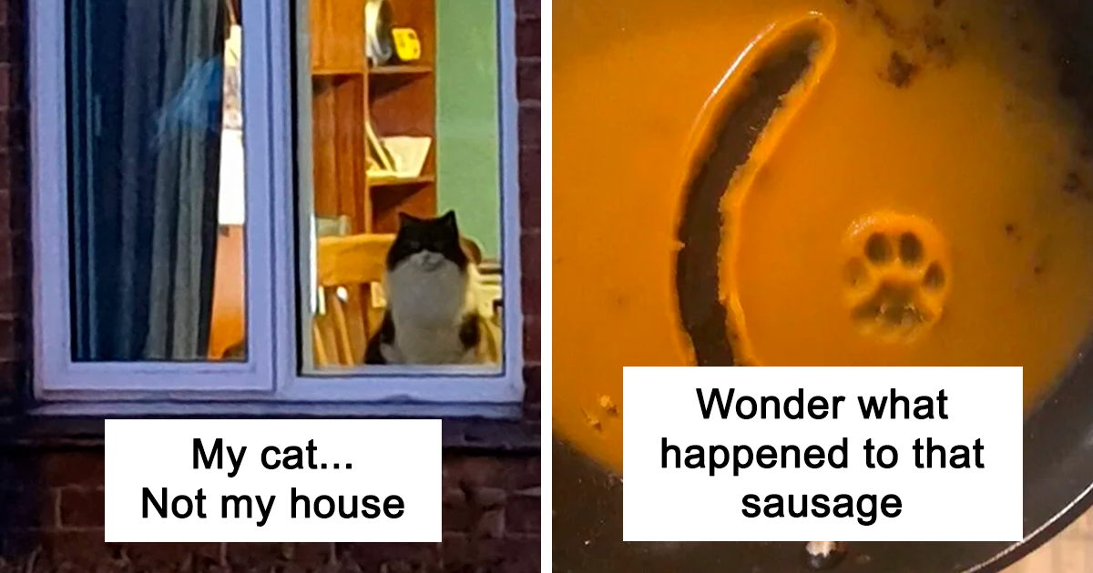 40 Hilarious Cat Snapchats That Will Leave You With The Biggest Smile (New Pics)