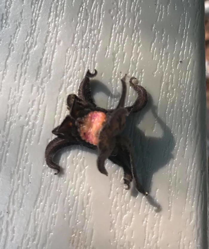 Weird Squirming Living Lovecraftian Nightmare On Our Lawn Chair This Morning. What Is This Thing?