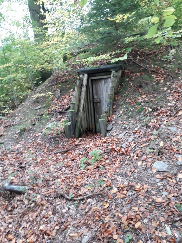 Saw This In A Forest In Germany. What Is This Thing?
