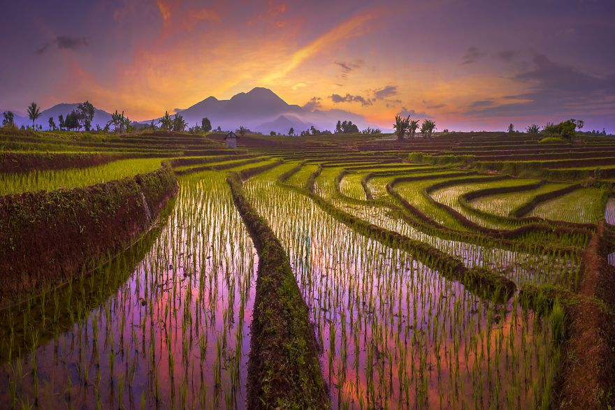 Morning Reflection Of The Red Sky, With The Amazing Pattern Of Terrace Rice Fields In North Bengkulu