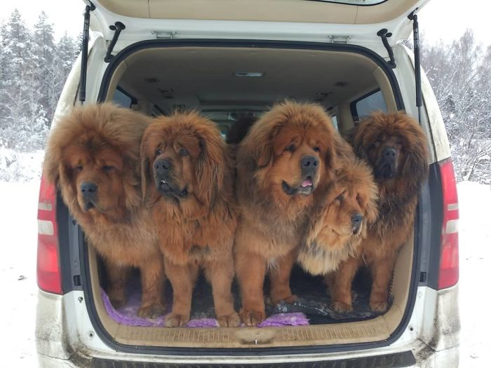 Car Full Of Love And Big Boys