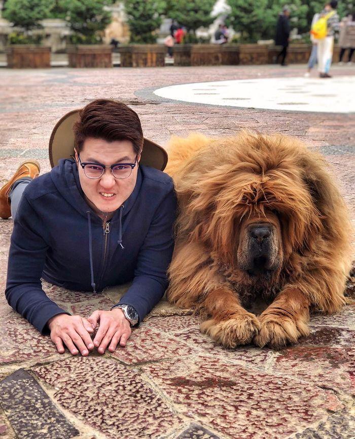 Mastiff And Me