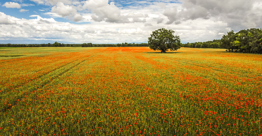 Poppyfield In France