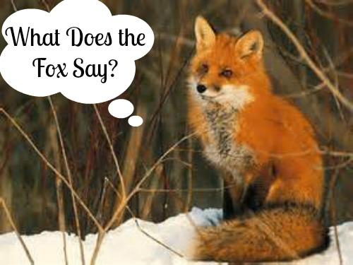 Fox-5dce0a3dd4681.jpg
