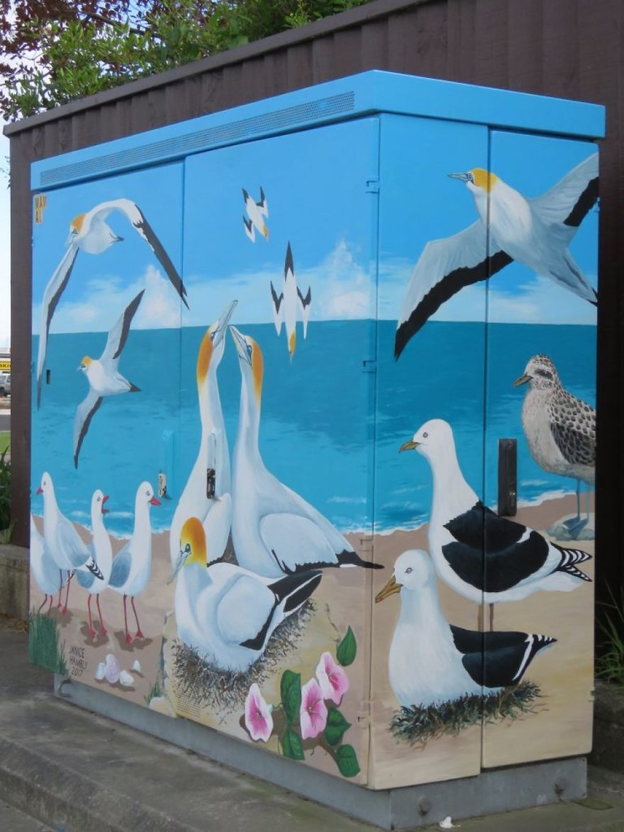 Gannets By Janice Hambly