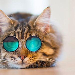 KittyComics