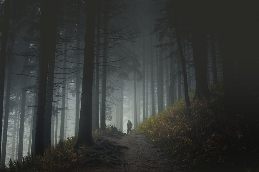 Forest Path In Tatra Mountains, Poland