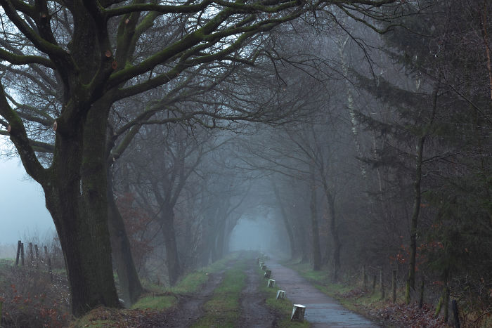 Misty Dirt-Road And Bicycle Lane
