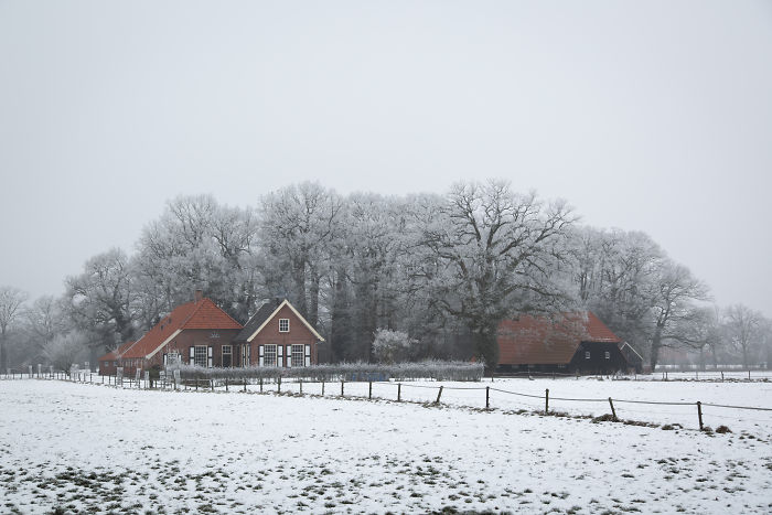 Winter At The Farmyard, Near Borne