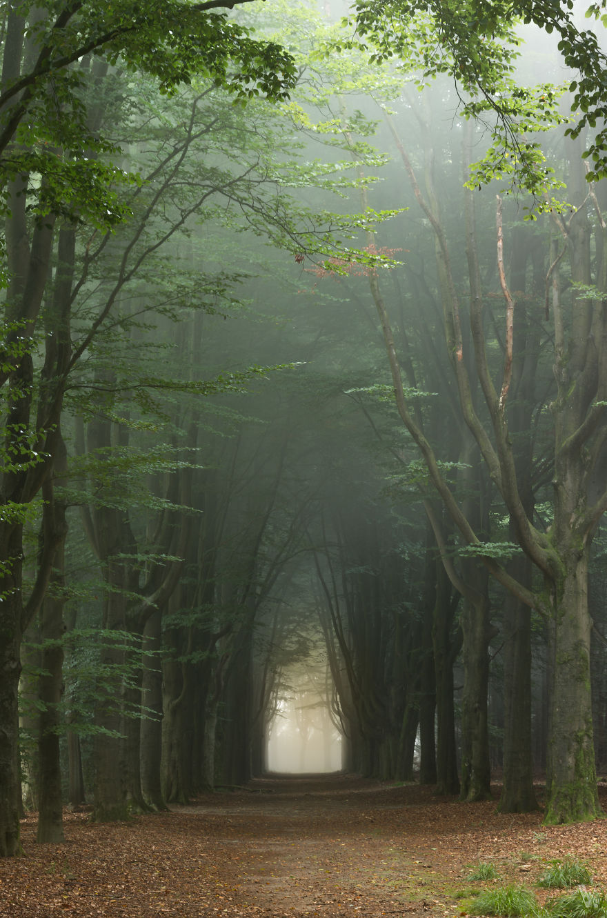 Tree Alley On A Summer Morning Near Enschede