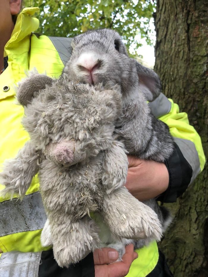 Rescuers Take In An Abandoned Rabbit Clinging To Its Teddy Bear