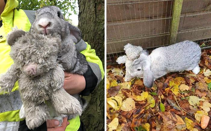 Estos rescatadores salvaron a un conejo abandonado que no soltaba a su peluche