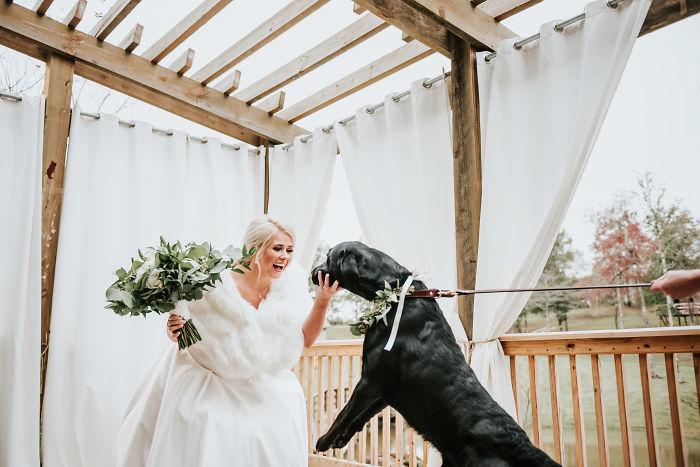 Собака на свадебной фотосессии