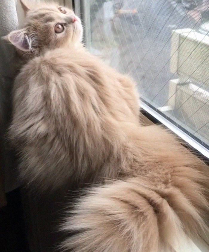This Cat Has A Majestic Fluffy Tail Just Like A Squirrel