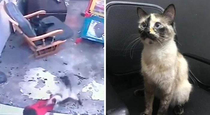 Este vídeo muestra a un gato corriendo para salvar a un bebé que estaba a punto de caerse por las escaleras