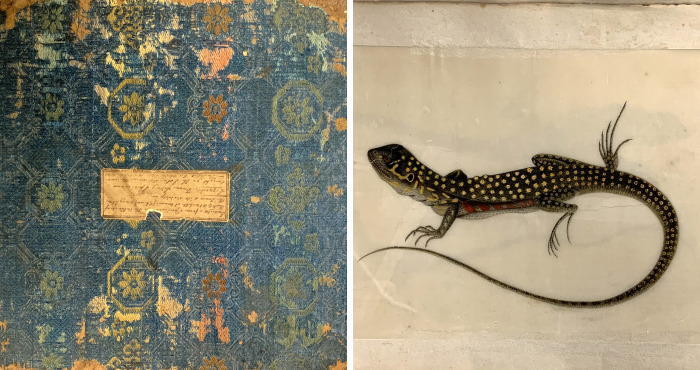 Unique 1831 Chinese Lizard Manuscript That Might Have Changed The History Of Science
