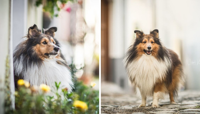 I Photograph My Dogs Life In The City