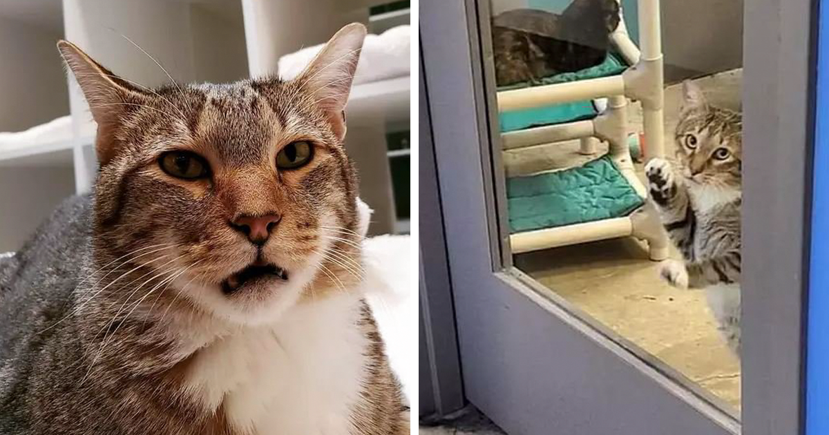This 'Criminal' Cat Keeps Letting Other Shelter Cats Loose So He Gets Put In Solitary Confinement