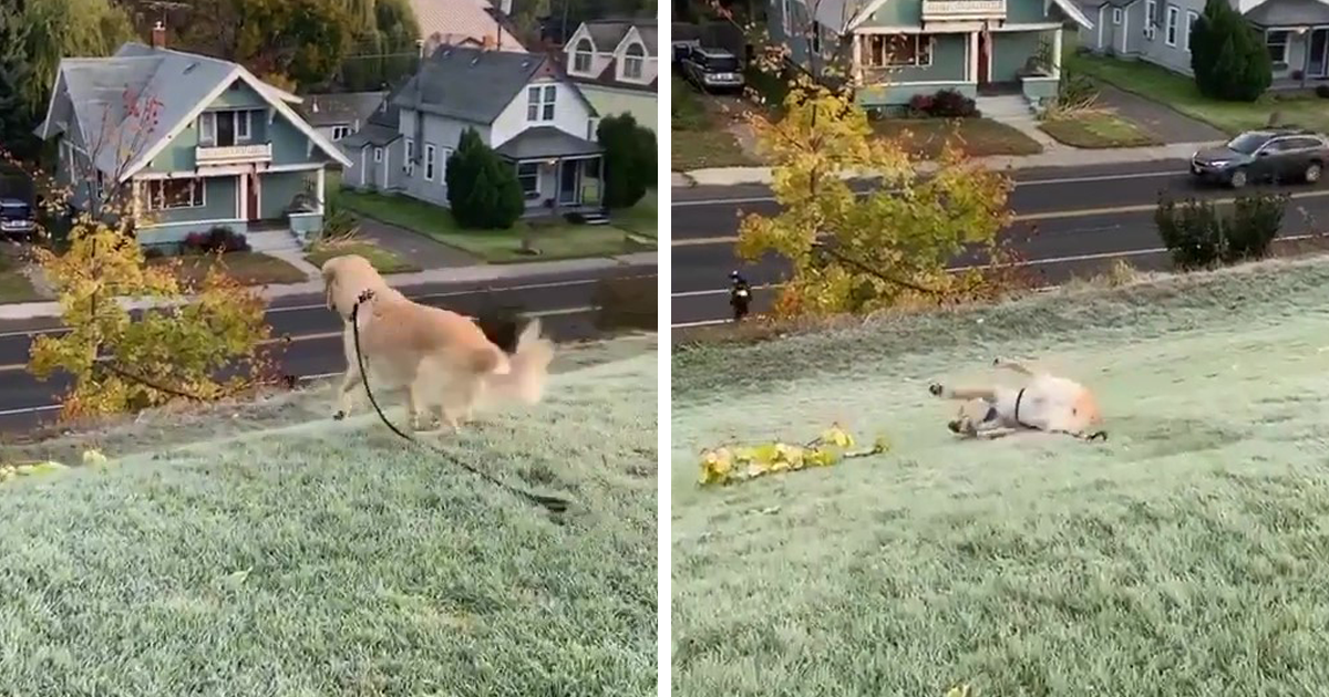 This Adorable Doggo Enjoys Sliding Down A Hill, Showing That Happiness Is In The Simple Things