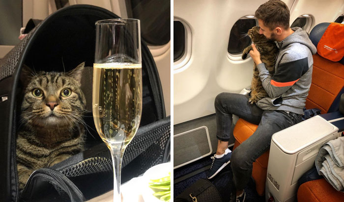 Guy Sneaks A Fat Cat On Board An Airplane, Gets Punished By The Airline After Landing
