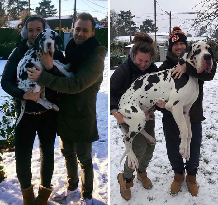 De Cachorro A Woofy En Solo Un Año