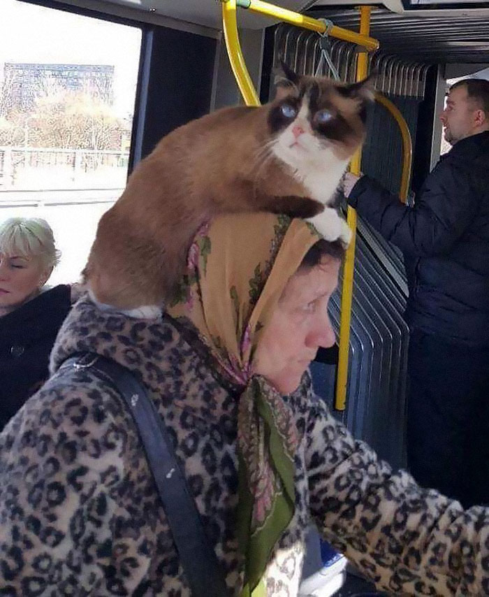 Ľudia-Of-trolejbusy