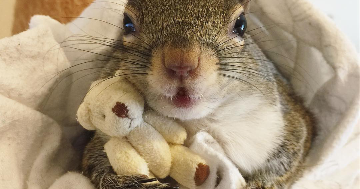 This Squirrel Rescued From Hurricane Isaac Can't Sleep Without Her Teddy Bear