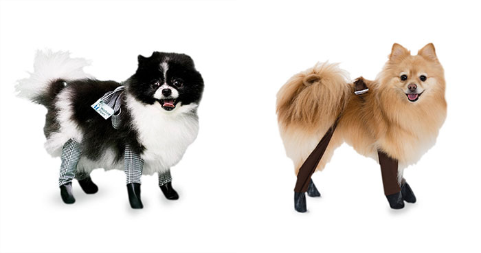 You Can Now Get Your Dog A Pair Of Leggings To Warm Their Paws