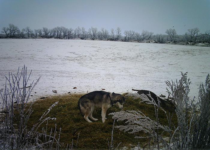 Собака убежала из дома